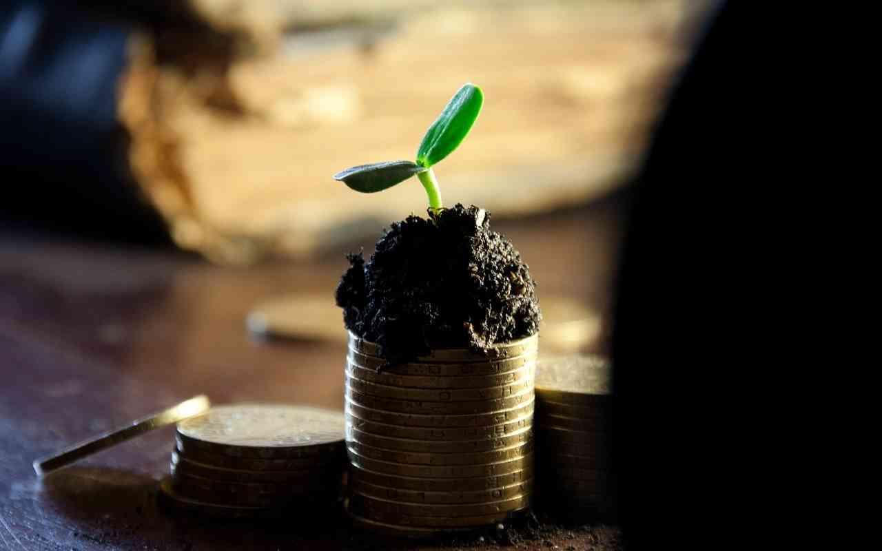 blomst på penger